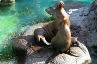 Baby-Friendly Zoo Trip North Carolina (A Mom's Visit With Her Toddler)
