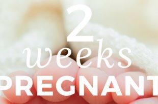 2-weeks-pregnant