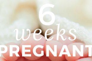 6-weeks-pregnant info