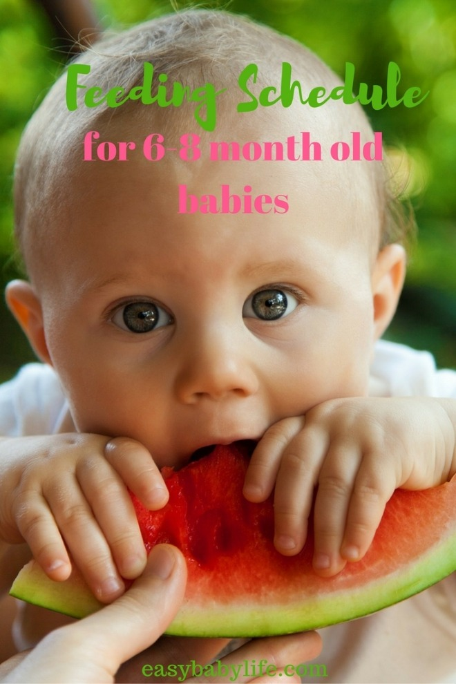 feeding schedule for 6-8-month-old babies
