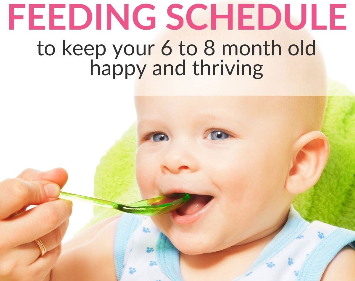 super easy feeding schedule for 6 to 8-month old babies to keep them