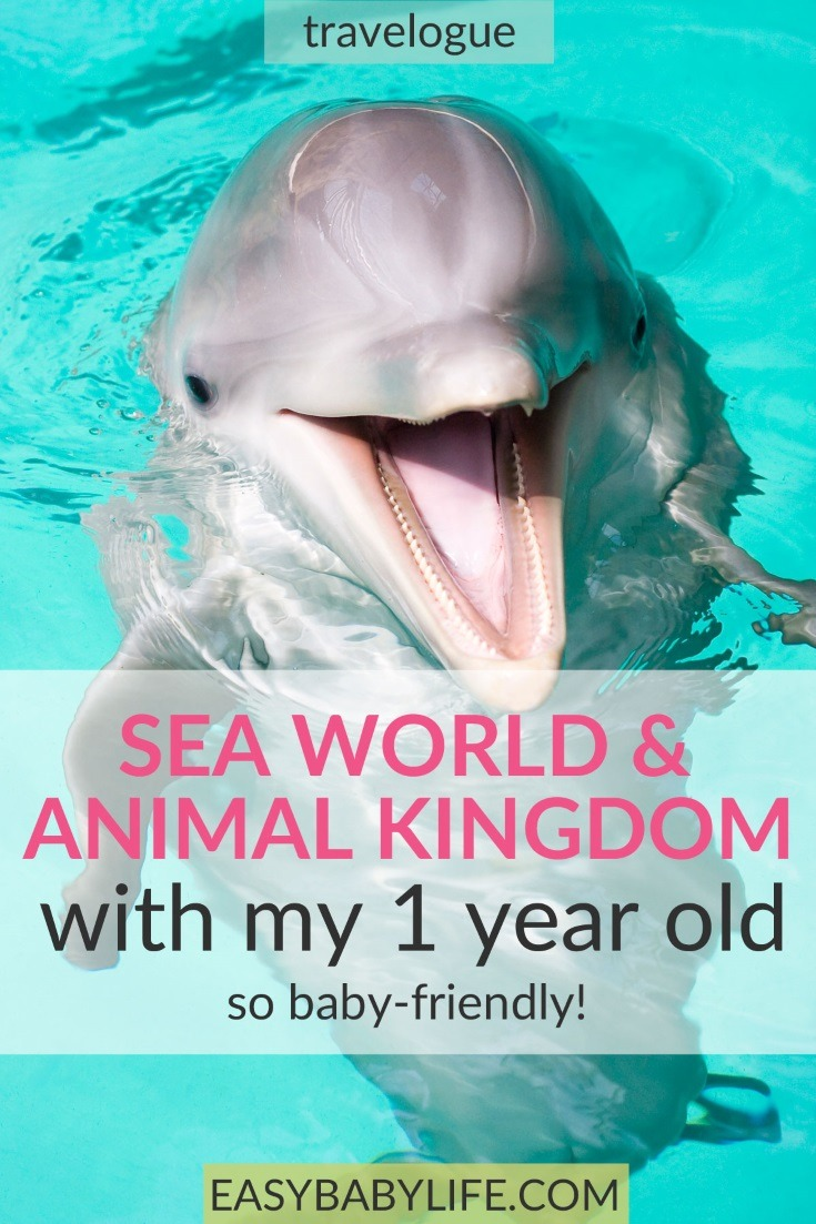 Not sure if you should take your little one to Sea World or Animal Kingdom? Here are tips from a mom who's done both. :) baby travel, toddler travel, sea world with kids,